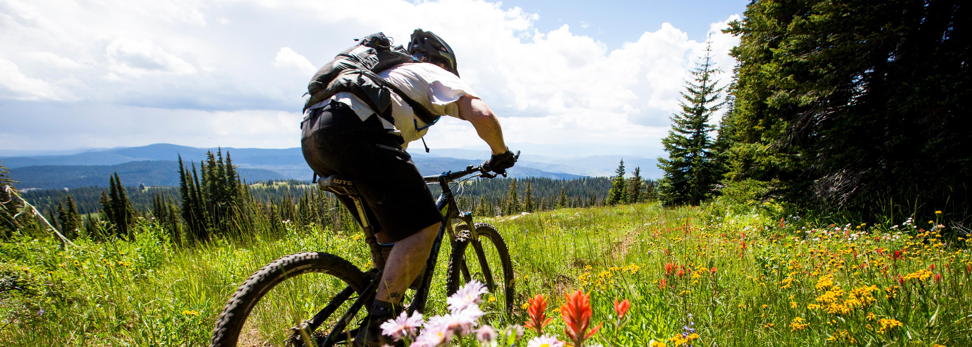 mountain biking in meadow of wildflowers