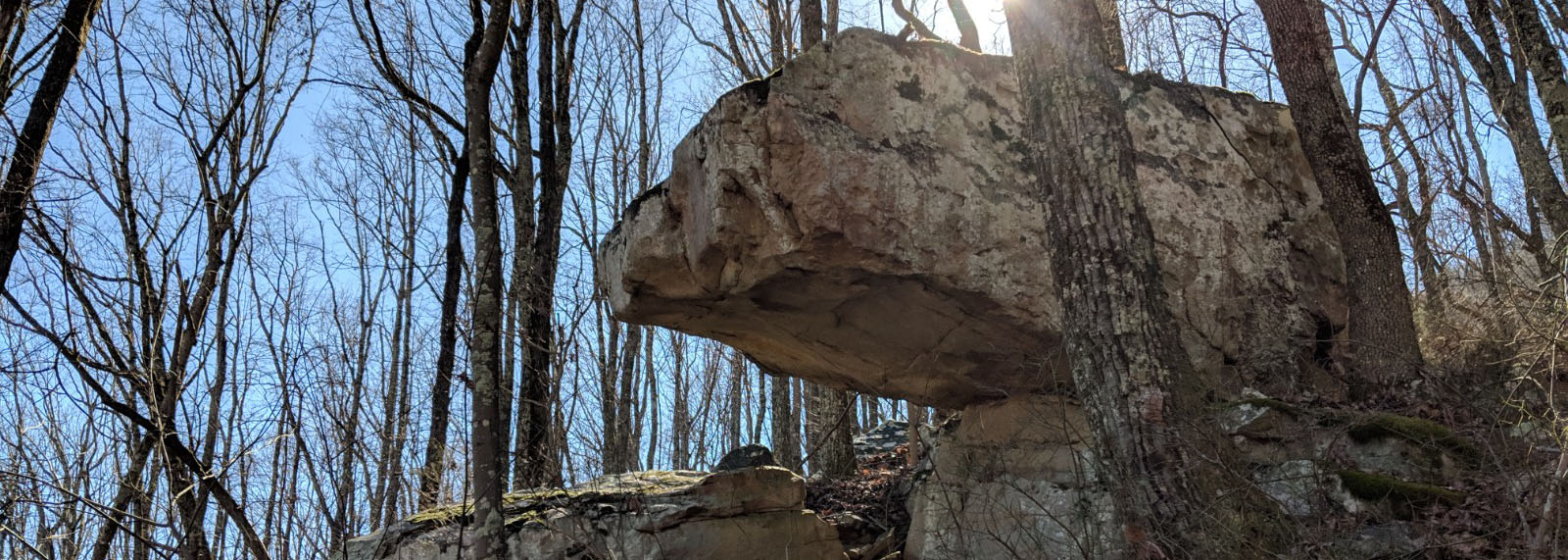 Woods, Tennesee, Large Rock, Trail Planning