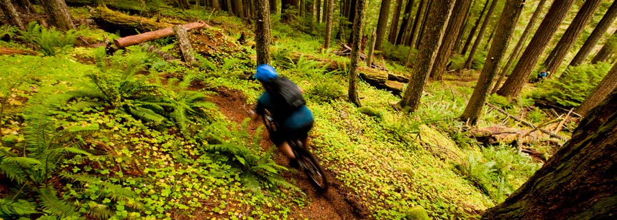 riding in ferns and loam